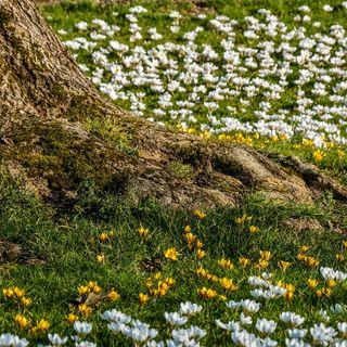 La gestione sana delle foreste riduce di otto volte l'erosione del suolo