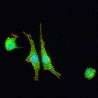 La prima sinapsi artificiale comunica con le cellule