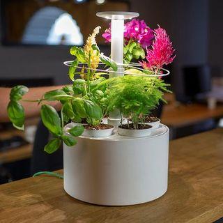 La tendenza della settimana: voglia di verde in casa, tutto sul micro-giardinaggio (di Alessandra Magliaro)