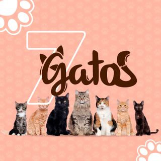 7 mitos de los gatos