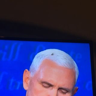 Fly on Mike Pence head said it all!!!