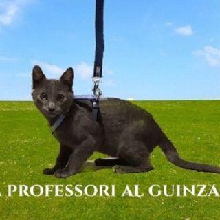 #na Professori al guinzaglio