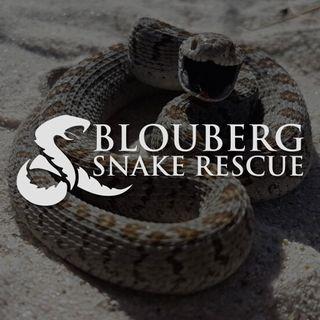 Blouberg Snake Rescue