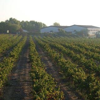 Ep 199: Cava -- Spain's Bubbly Wine