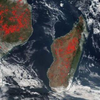 In Madagascar bruciano foreste e riserve naturali per fare carbone