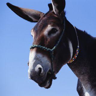 Mules: Episode 9