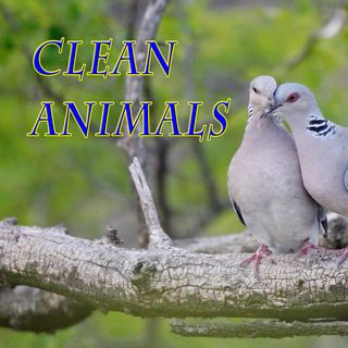 Clean Animals, Genesis 7:1-4