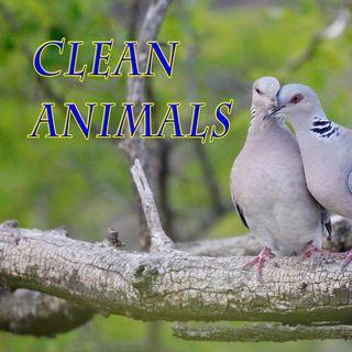 Clean Animals, Genesis 7:1-4