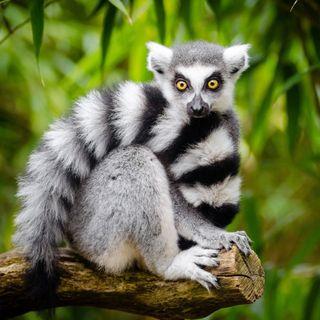 Due settimane nel nord del Madagascar