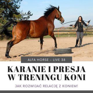 Live 38: Kara i presja w treningu koni