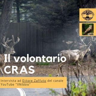 Il Volontario CRAS, Centro Recupero Animali Selvatici (intervista) - Impronta Animale