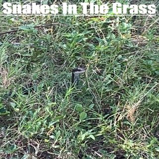 Ep124 Snakes In The Grass
