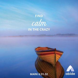 Calm Amongst the Crazy