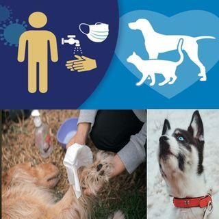E1: Cuidado de nuestras mascotas en tiempos de pandemia.