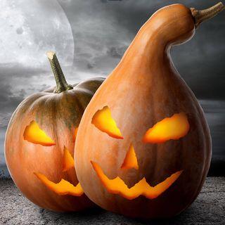 Das Schäfer & Bursche Halloween-Spezial – Horror pur