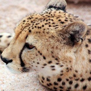Resolución ONU para proteger la vida silvestre