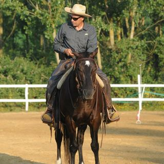 # 3 - Clicker Training vs Natural Horsemanship