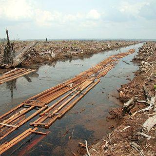 Dalla finanza $2600 miliardi che danneggiano la biodiversità