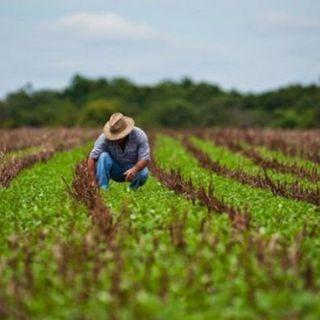 Urge el uso intensivo y sostenible de las tierras cultivables