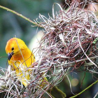 Puntata 10 - Obiettivi come nidi