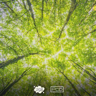 #040 - Série profissões: Engenheiro Florestal