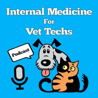 017 Interviewing Vet Tech Kelsey and Open Hospitals