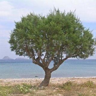 Episode 07 - Glory Knowledge - Brother Abraham's Tamarisk Tree