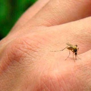 Dengue Generalidades y sintomas