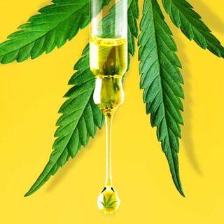 Sulla questione Cannabis questo governo si deve vergognare!