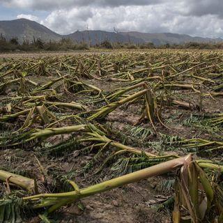 #32 - Consumo di suolo: cos'è, cosa causa e come si può fermare