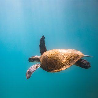 61 - Che differenza c'è tra una tartaruga marina e una di terra? - Zoologia