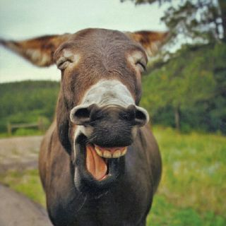 THE LORD WILL BLESS THE LAUGHING DONKEY!
