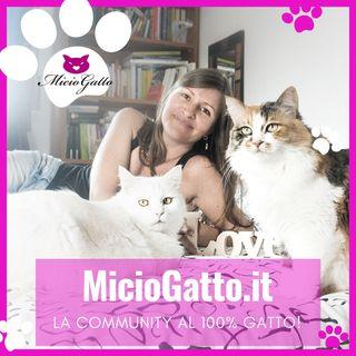 MicioGatto - Tutto sui gatti!