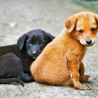 Adopción de perros callejeros por escuelas, hospitales, empresas y dependencias de gobierno