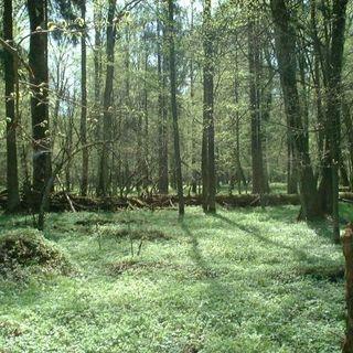 Foreste primarie europee: un tesoro nascosto da salvare
