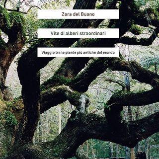 """Zora del Buono """"Vite di alberi straordinari"""""""
