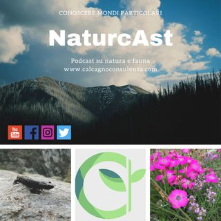 NaturcAst