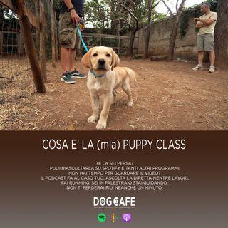 #038 - Cosa è la (mia) puppy class