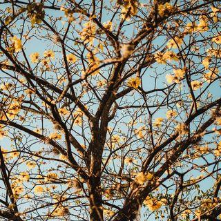 Aug 8  Falling Leaves