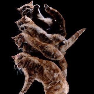 The Kitten Kong Show: Falling In Falling Out.