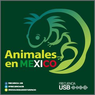Animales en México