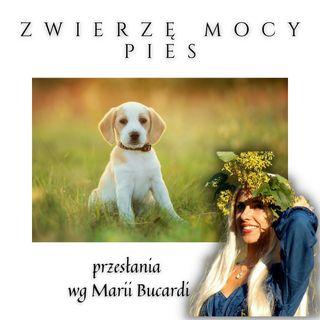 Zwierzę Mocy - Pies - także w kartach Lenormand - szamanizm rytualy magiczne M. Bucardi