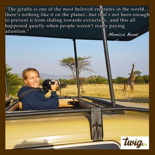 Monica Bond - World Giraffe Day