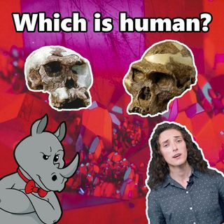 Is it human? Ape? Both? Neither?