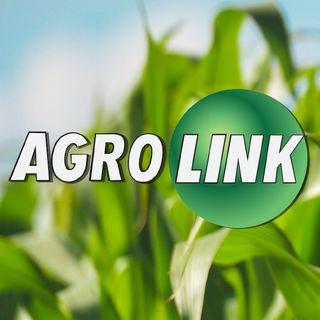 Portal Agrolink o maior produtor de conteúdo Agro