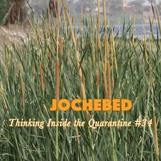 Jochebed (Thinking Inside the Quarantine #34)
