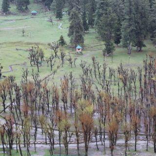 ബേതാബ് വാലിയും മിനി സ്വിറ്റ്സര്ലാന്റും   Kashmir Diary Part 7