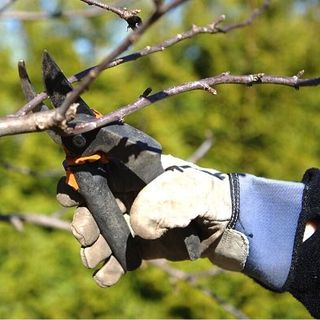 DIY GM Ep.118 Smart Pruning Basics - Benefits to Pruning Your Plants