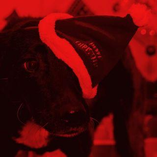 Animali Sotto l'Albero? NO Grazie - Special di Natale (intervista)