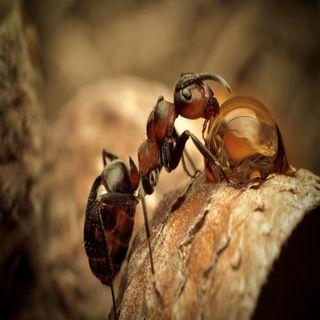 Episodio #23: Animales Fascinantes - Las Hormigas